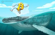 تعداد نهنگ های بیت کوین در بازار گاوی اخیر به اوج رسید